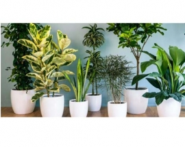 Best Plants to Filter the Air in your Home